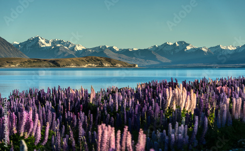 Fotobehang Nieuw Zeeland Lake Tekapo with Aroki Mt.Cook, New Zealand