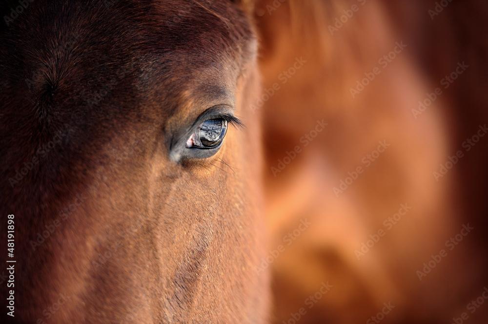 Fototapety, obrazy: Oko konia