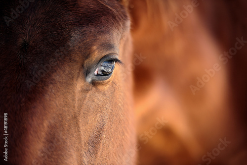 Obraz Oko konia - fototapety do salonu