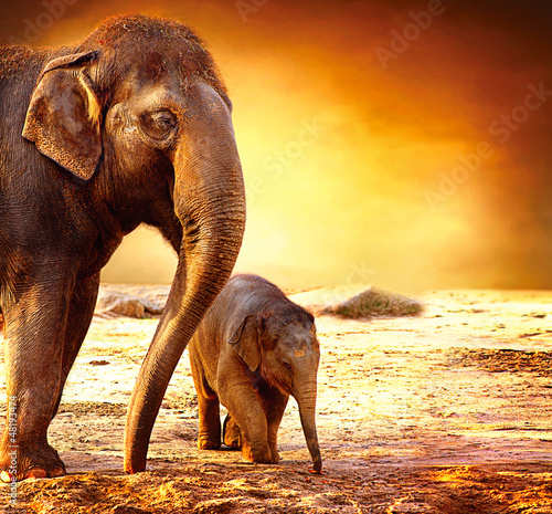 Foto op Aluminium Olifant Elephant Mother and Baby outdoors