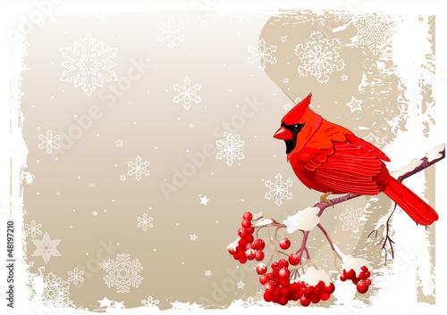 Photo  Red Cardinal bird background