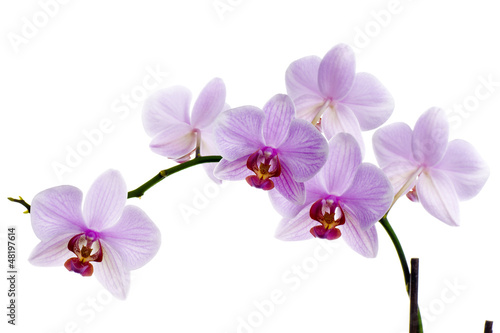 Recess Fitting Orchid Pink orchid isolated on white background
