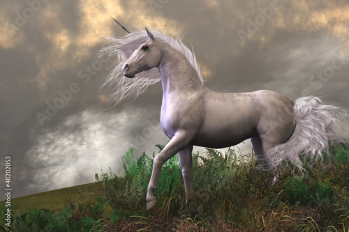 White Unicorn Stallion Poster