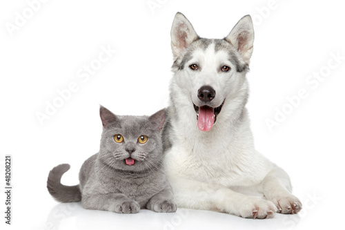 Fényképezés Cat and dog together on a white background