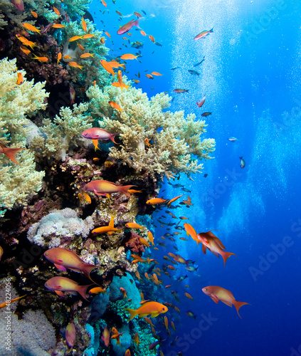 Poster Sous-marin Photo of coral colony
