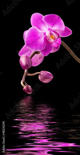 Foto op Canvas Orchidee Pink orchid on black