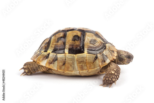 Foto op Aluminium Schildpad Turtle isolated on white background