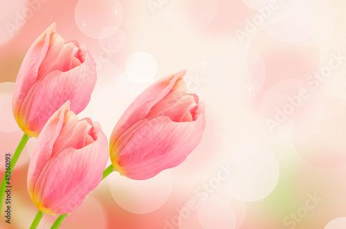 Tematy fototapet  kwiaty-tulipanow