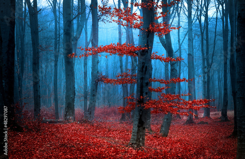 Autumnal foggy forest