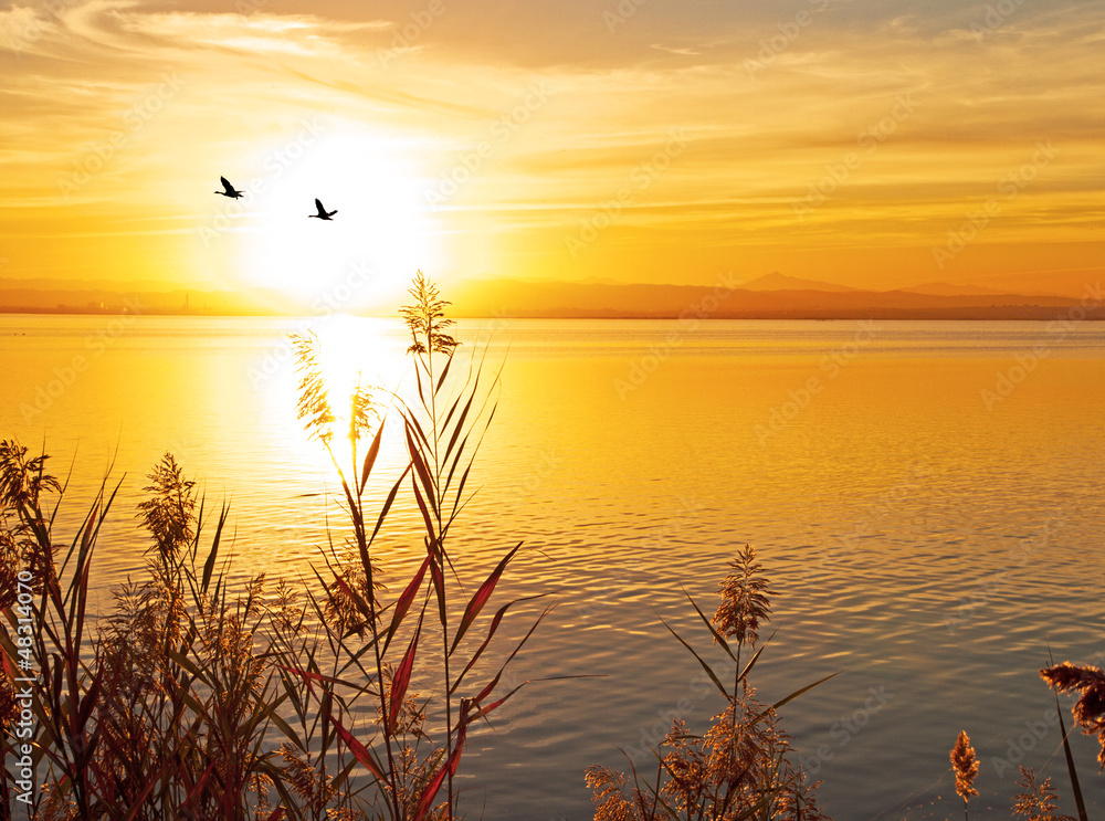 Fototapeta partiendo el sol
