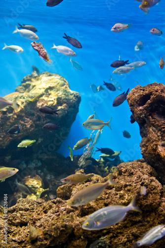 Staande foto Koraalriffen fishes