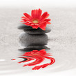 Leinwandbild Motiv Galets et gerbera reflet zen