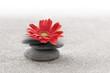Leinwandbild Motiv Sable et gerbera zen