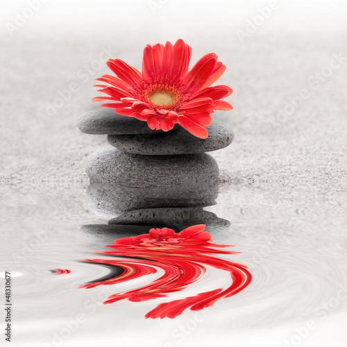 Photo sur Plexiglas Zen pierres a sable Galets et gerbera reflet zen