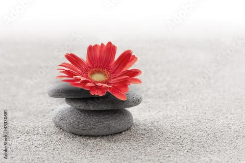 Photo sur Plexiglas Zen pierres a sable Sable et gerbera zen