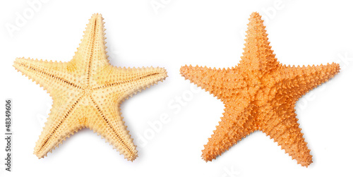 The Caribbean starfish ( Oreaster reticulatus ). Canvas Print