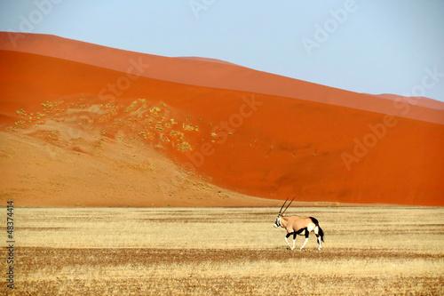 Foto op Canvas Baksteen Desert Kalahari