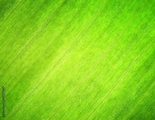 Texture of green leaf. Nature background. - 48377487