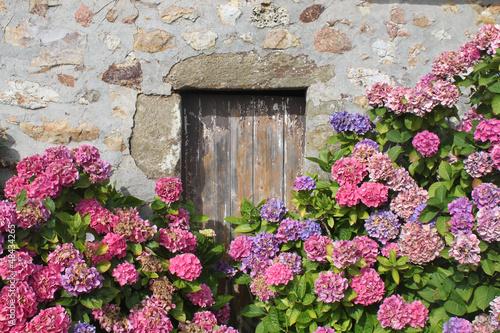 Door stickers Hydrangea hydrangeas
