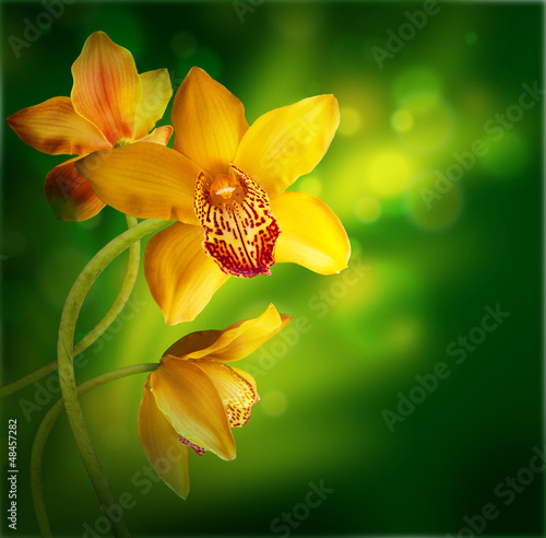 Orchids in the drops of dew on a white background