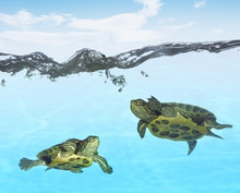 Turtle: To The Surface
