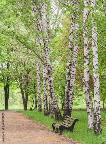 Spoed Fotobehang Berkbosje wooden bench in the park