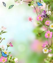 Background Nature