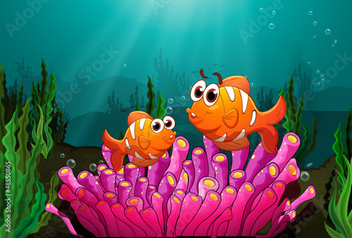 Aluminium Prints Submarine Two fishes above a pink coral