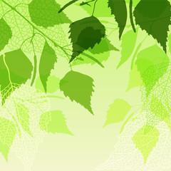 NaklejkaFresh background of green birch leaves.