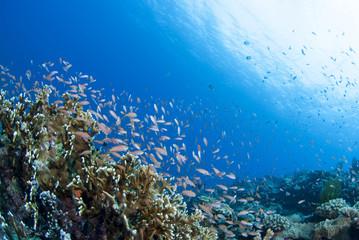 Fototapeta na wymiar 海底に舞う小魚の群れ