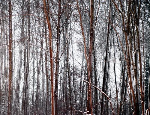 nagie-drzewa-w-zimowy-wieczor