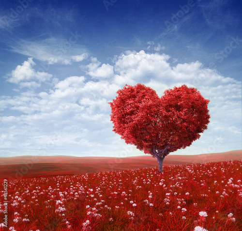 Fotografie, Obraz  Tree in the shape of heart, valentines day background,