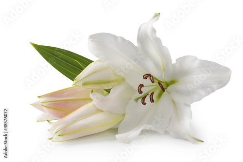 Photo  White lily flowers