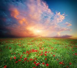 Obraz na SzkleBeautiful meadow