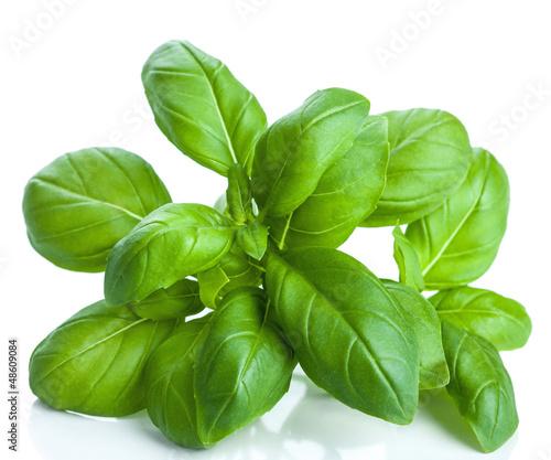 Fototapeta basil leaves isolated obraz