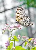 Fototapeta Natura - Butterfly..