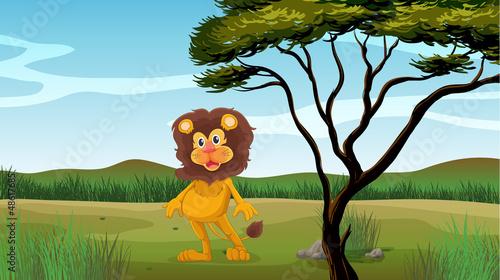 Foto op Aluminium Zoo A female lion