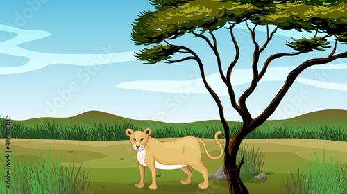Poster de jardin Zoo Lion illustration
