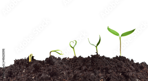 Foto op Canvas Planten Plant germination and growth