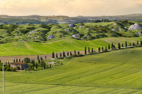 Fotografie, Obraz  Farmhouse and alley in near Siena, Crete Senesi, Tuscany, Italy