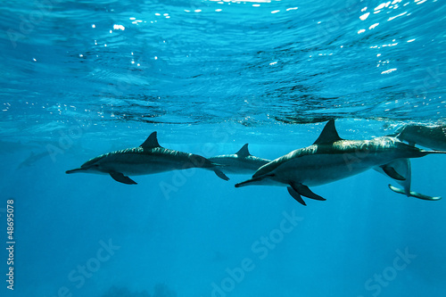 Foto op Canvas Dolfijnen Dolphins in the sea