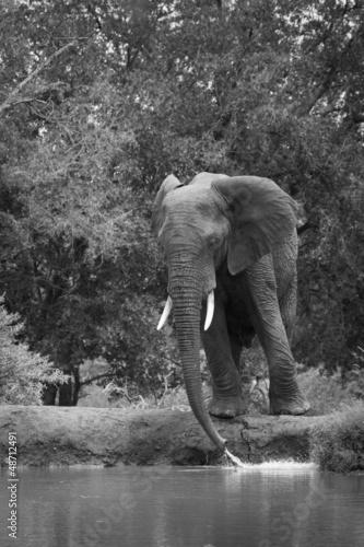 Foto op Aluminium Olifant Eléphant mâle au bord d'un point d'eau