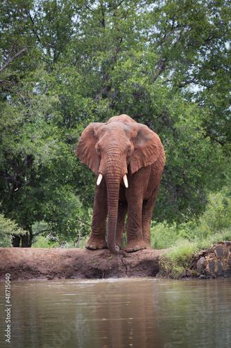 meski-slon-przy-krawedzia-waterhole