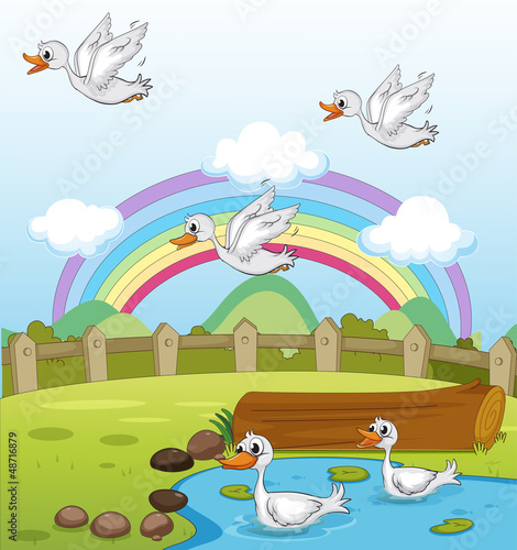 Poster Rivier, meer Ducks and a rainbow