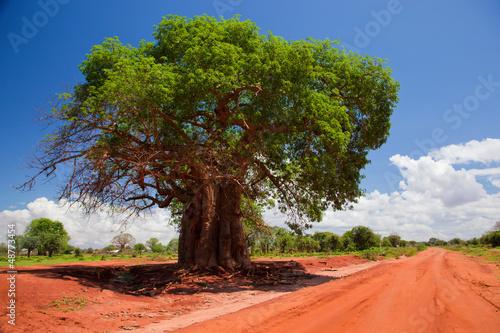 In de dag Baobab Baobab tree on red soil road, Kenya, Africa