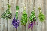pachnące zioła - 48787441