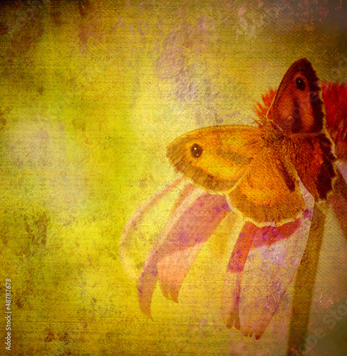 Photo sur Toile Papillons dans Grunge old grunge butterfly fabric texture