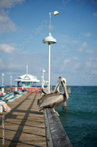 Fotobehang Pier Miami - Florida