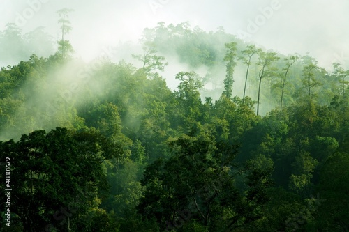 Türaufkleber Dschungel Morning misty tropical forest