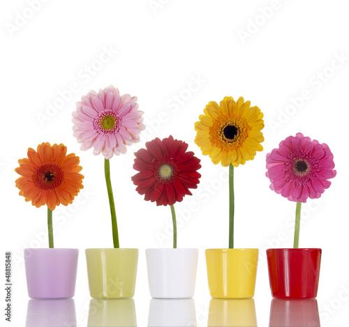 Ingelijste posters Gerbera Blumen in bunten Blumentöpfen